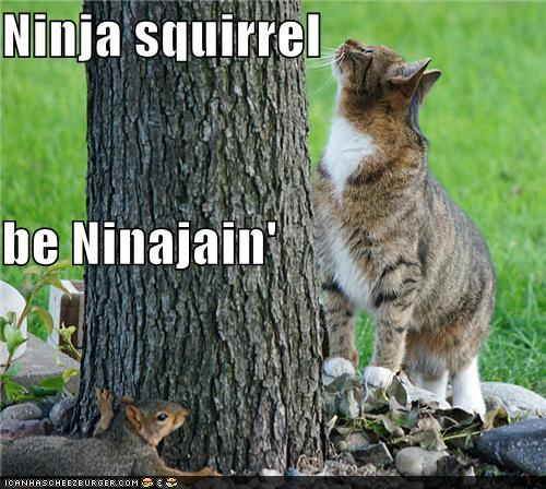 Ninja squirrel be ninjain'
