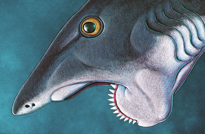shark-relative-had-buzzsaw-mouth-130226-660x433-picture