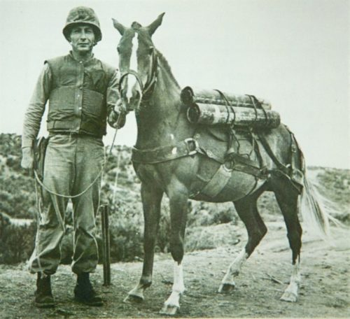 Sgt. Reckless with her handler, Gunnery Sgt Latham